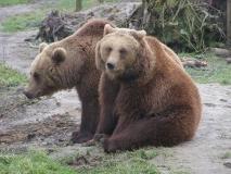 027-dierenrijkeuropa2006