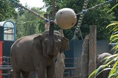 002-dierenparkamersfoort2008