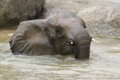 025-bioparcvalencia2009olifanten