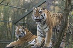 028-dierenparkamersfoort2009overig