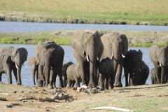 012-afrika2010nov25olifanten