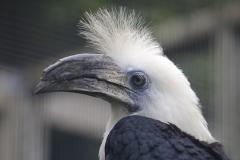 023-vogelparkavifauna