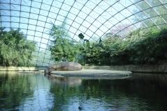 000-zooberlin2010nijlpaarden