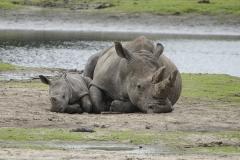 031-safariparkbeeksebergen2011