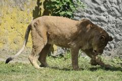 004-zoowarschau2011
