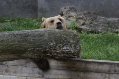 008-zoowarschau2011