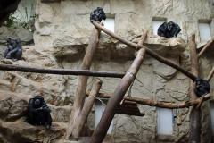 016-zoowarschau2011