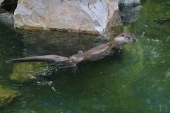 021-zoowarschau2011