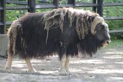 022-zoowarschau2011