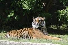 025-zoowarschau2011