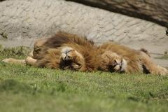 026-zoowarschau2011