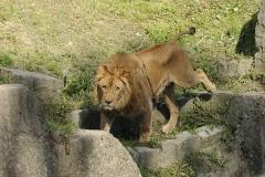 029-zoowarschau2011