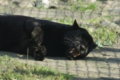 033-zoowarschau2011