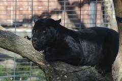 034-zoowarschau2011