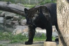 035-zoowarschau2011