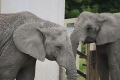 036-zoowarschau2011