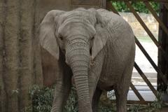 037-zoowarschau2011