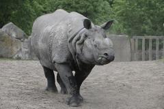 039-zoowarschau2011
