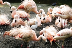001-dierenparkamersfoort2012sep