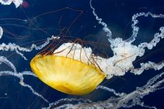 001-aquariumofthebay2013
