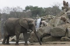 006-safariparkbeeksebergen2013