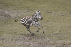 007-safariparkbeeksebergen2013
