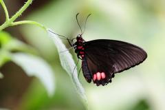 015-vlindersaandevliet2013