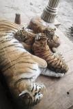 000b-dierenparkamersfoort2014