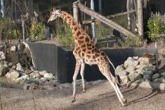 001-dierenparkamersfoort2014