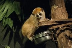 005-dierenparkamersfoort2014