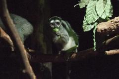 006-dierenparkamersfoort2014