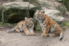 007-dierenparkamersfoort2014