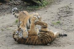011-dierenparkamersfoort2014