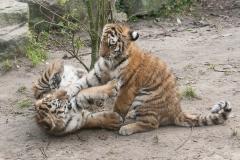 013-dierenparkamersfoort2014