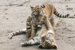 015-dierenparkamersfoort2014