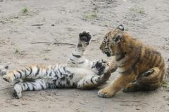 016-dierenparkamersfoort2014