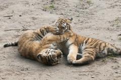 017-dierenparkamersfoort2014