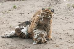 018-dierenparkamersfoort2014