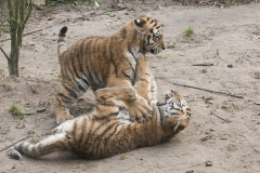 019-dierenparkamersfoort2014