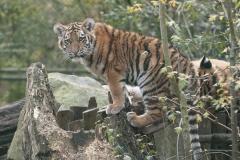 020-dierenparkamersfoort2014