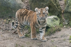 021-dierenparkamersfoort2014
