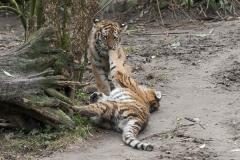 022-dierenparkamersfoort2014