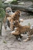 023-dierenparkamersfoort2014