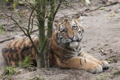 024-dierenparkamersfoort2014