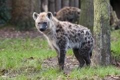 028-dierenparkamersfoort2014