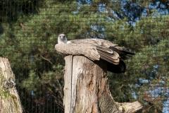 032-dierenparkamersfoort2014