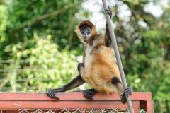001-monkeycentre2014