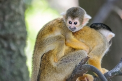 002-monkeycentre2014