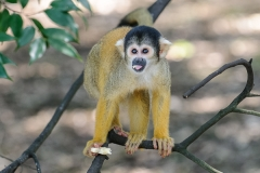 003-monkeycentre2014