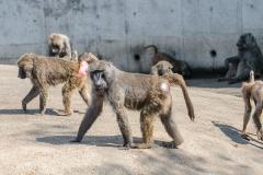 004-monkeycentre2014